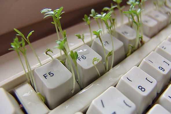 Keime von Kresse spriessen aus Tastatur